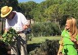 Tour de un día de vino de Siena a Montalcino, Pienza y Montepulciano. Siena, ITALIA