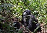 Safari de rafting de 5 días en gorila y aguas bravas.. Kampala, UGANDA