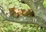 3 Days Group Safari To Queen Elizabeth Park In Uganda.. Kampala, UGANDA