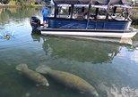 Manatee Snorkeling Tour - VIP, Crystal River, FL, ESTADOS UNIDOS