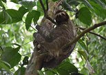 Sloth and Rainforest Adventure with Lunch, Liberia, COSTA RICA