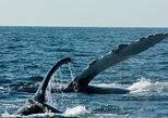 Whale Watching Cruise in Puerto Vallarta. Puerto Vallarta, Mexico