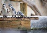 Skip the Line: Little Penguin Encounter Ticket. Napier, New Zealand