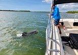 Ten Thousand Islands Adventure Boat Tour,
