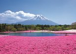 Moss phlox , Mt Fuji 5th Station, and Strawberry Picking with Lunch, Tokyo, JAPON