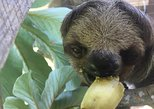 Roatan Shore Excursion: Monkeys, Sloths, and Snorkel Adventure. Roatan, Honduras