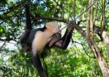 Monkeys Place & Puntarenas City Tour, Puntarenas, COSTA RICA