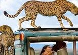 4 Days & 3 Nights LUXURY CAMPING TANZANIA-Tarangire, Serengeti, Ngorongoro. Arusha, Tanzania