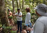 Amazon Forest Tour 4-Hour Trekking,
