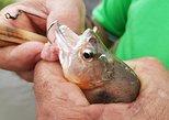 Solimoes River Piranha Fishing and Alligator Watching Tour,