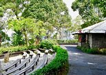 Nature Walk at Penang Hill, ,