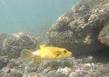 Ocean Kayak and Snorkeling to Chora Island, ,