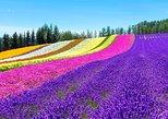 Hokkaido Highlights of Flower Blossom, Asahiyama Zoo& Ninguru Terrace. Sapporo, JAPAN