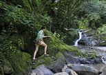 Yungas Half-Day Small-Circuit Nature Tour from Tucumán,