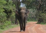 Evening Safari - Yala National Park with Janaka safari - 02.00 pm to 06.30 pm, Parque Nacional Yala, Sri Lanka