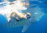 Whaleshark Adventure Oslob with Breakfast, Ciudad de Tagbilaran, FILIPINAS