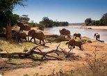 Tarangire National Park Day Trip. Arusha, Tanzania