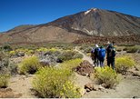 Hiking trail Pico Teide with permission and guide in Tenerife. Tenerife, Spain