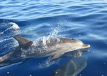 Whales and Dolphins watching Tour in the best area of Madeira!. Funchal, PORTUGAL