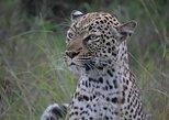 15 days Uganda Wildlife & Activity Holiday, Kampala, UGANDA