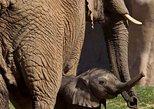 Transfer do Parque Zoológico do Zoológico de San Diego com embarque no hotel. San Diego, CA, ESTADOS UNIDOS