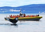 Full-Day Whale Watching Cruise from Quebec City. Quebec, CANADA