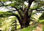 Bcharre - Qadisha Valley & Cedars Forest Tour,