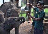 Udawalawe National Park Safari with Elephant Transit Home Visit. Parque Nacional Yala, Sri Lanka
