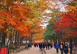 The Beauty of the Korea Fall Foliage Discover 11days 10nights, Incheon, COREA DEL SUR