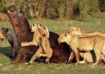 6-Day Fascinating Southern Tanzania Safari. Dar es Salaam, Tanzania