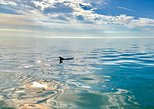 Private Ten Thousand Islands Boat Tour: up to 6 people, Naples, FL, ESTADOS UNIDOS