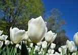 Walking tour with a private tour guide in the botanical gardens of Villa Taranto, Lago Mayor, Itália