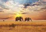 Sightseeing & Train Safari Tour, Negombo, Sri Lanka