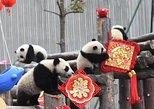 Chengdu Panda Base and Wuhou Temple,Jinli Ancient Town Day Tour, Chengdu, CHINA