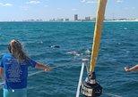 Dolphin Sightseeing Sail on The Privateer Catamaran. Panama City Beach, FL, UNITED STATES