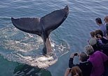 Gloucester's Most Recommended Whale Watch Company! Guaranteed Sightings, Gloucester, MA, ESTADOS UNIDOS