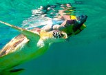Tulum Ruins Cenote and Swimming with Turtles from Playa del Carmen,