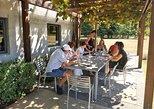 Half day Marlborough wine tour without lunch (4 hours) from Blenheim or Renwick, Blenheim, NUEVA ZELANDIA