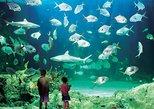 Sydney Pass: Aquarium, Sydney Tower, Crucero por el puerto y muchos más,