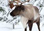 Skip the Line: Ecomuseum Zoo - Discover Québec's Wildlife in Winter Ticket, Montreal, CANADA