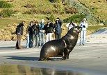 Peninsula Encounters - Standard tour - Penguins, Seals, Sea-lions and Albatross. Dunedin y la peninsula de Otago, New Zealand