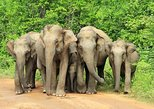Full-Day Private Tour to Udawalawa National Park. Bentota, Sri Lanka