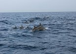 Dolphin Watching and Island Hopping in Panglao Bohol with Lunch, Ciudad de Tagbilaran, FILIPINAS