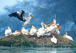 Private Tour to Bharatpur from Agra, Agra, India
