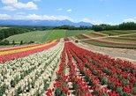 Hokkaido's Splendid Panorama Route! Visit Furano, Biei &Asahiyama Zoo!. Sapporo, JAPAN