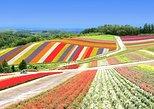 Hokkaido's Top Sightseeing of Farm Tomita, Shikisai no Oka in Biei & Blue Pond!. Sapporo, JAPAN