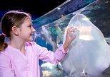 SEA LIFE Orlando Aquarium. Orlando, FL, ESTADOS UNIDOS