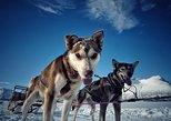 Safari de trineo con huskies en Laponia desde Tromso con una bebida caliente y pastel. Tromso, NORUEGA
