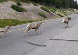 Excursão pelo Parque Nacional de Banff com um pequeno grupo,