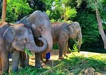 One day Elephant Experience In Chiang Mai, By Chiang Mai Elephant Home. Chiang Mai, Thailand